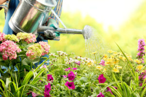 regar plantas ahorrando agua