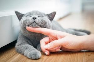 cuidados básicos para gatos mayores