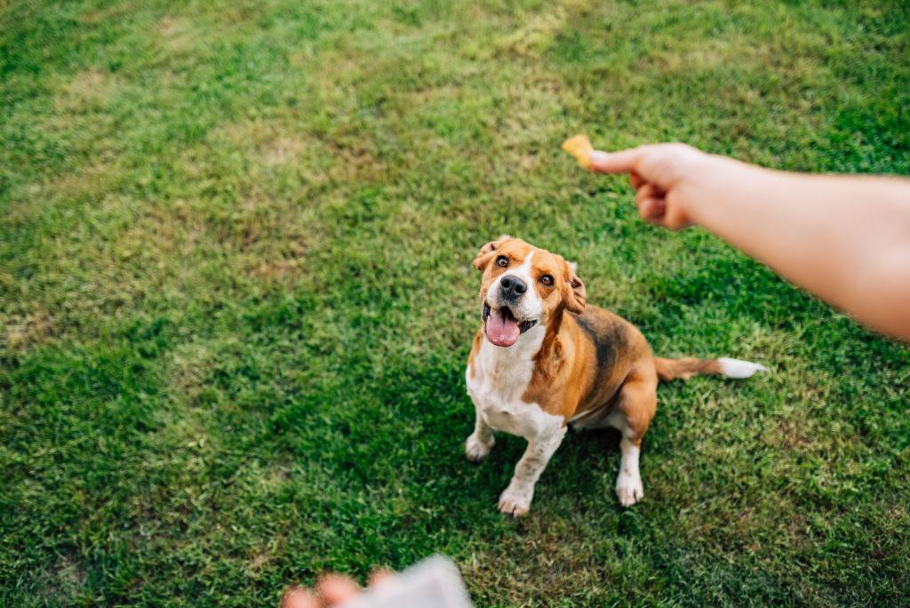 recompensa galletas para perros