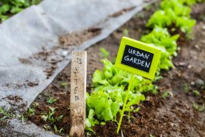 cultivar en casa garden box