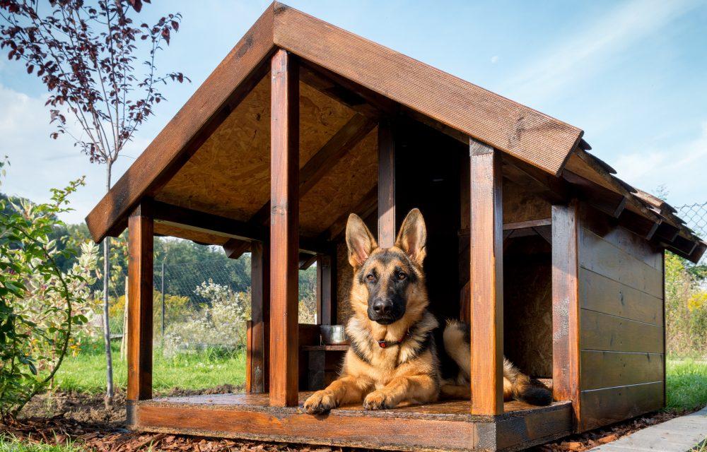 albergue para perros