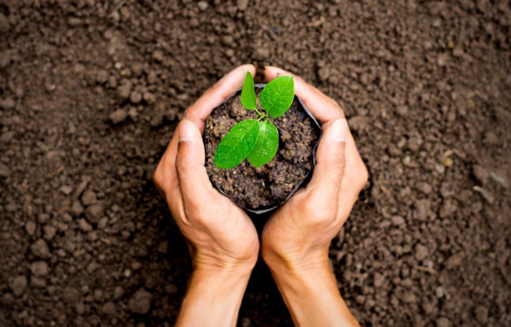 Revitaliza tu huerto antes de empezar a sembrar en septiembre