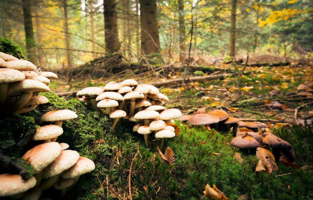 recoger-setas-plan-rural-que-hacer-en-otoño