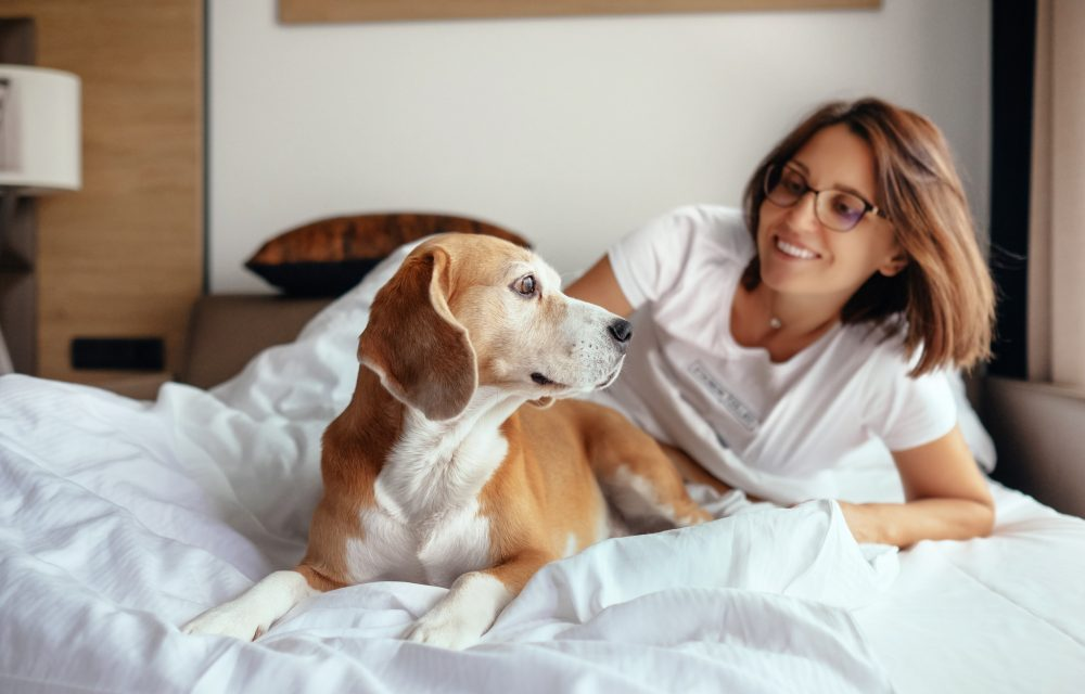 hotel pet friendly vacaciones con tu mascota